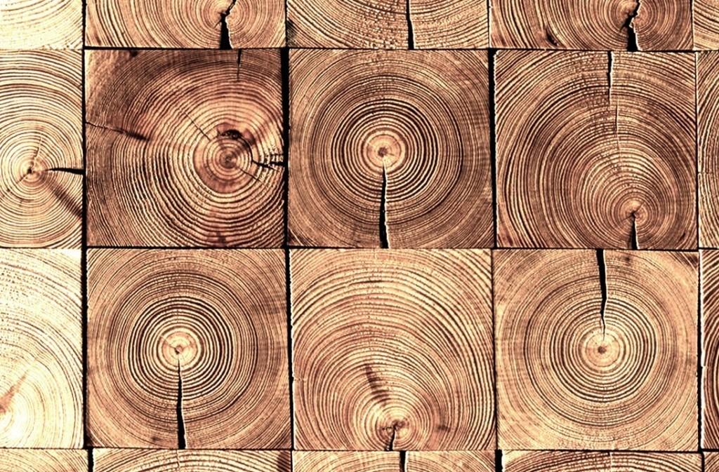 Danos-estructura-madera-perito-arquitecto2